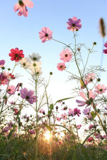 wild-flowers_Betty Young