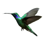 Hummingbird-Transparent-Background