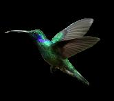Hummingbird-Transparent-Background